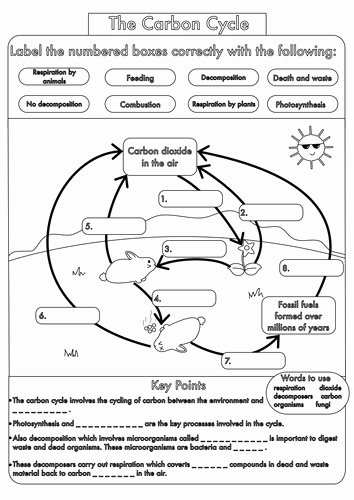 Biogeochemical Cycles Worksheet Answers New Water Carbon and Nitrogen Cycle Worksheet Answers