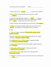 Biological Classification Worksheet Answer Key Luxury Biochemistry Review Worksheet and Answers Biochemistry