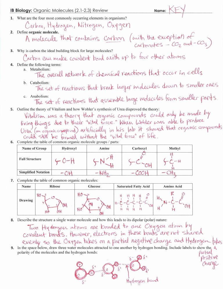 Biological Classification Worksheet Answer Key Unique 25 Beautiful organic Molecules Worksheet Review