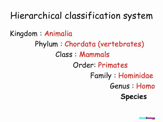 Biological Classification Worksheet Answer Key Unique Biological Classification Worksheet