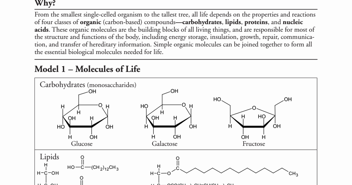 Biological Molecules Worksheet Answers Fresh Biological Molecules Pogil Pdf Google Drive