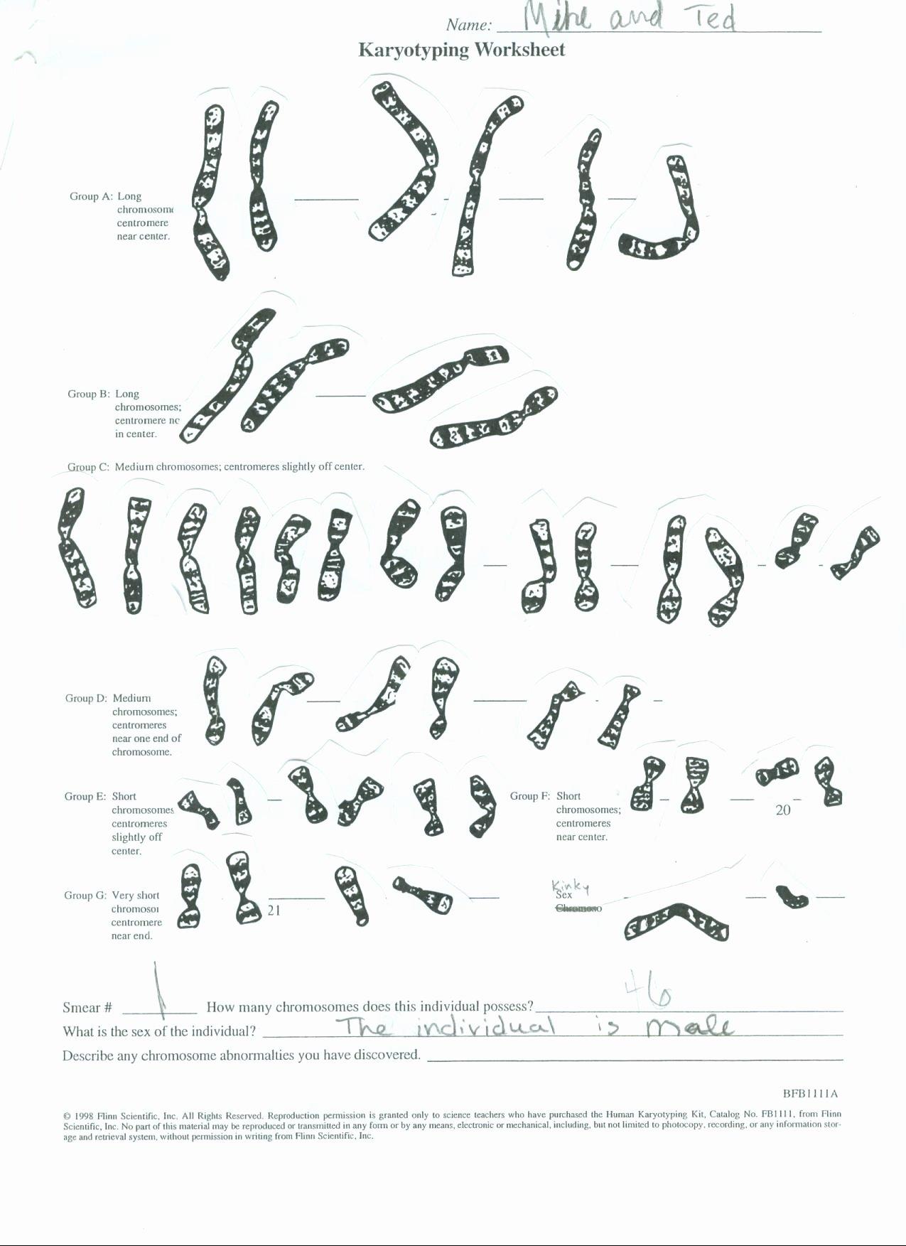 Biology Karyotype Worksheet Answers Key Best Of Worksheet Karyotyping Worksheet Grass Fedjp Worksheet