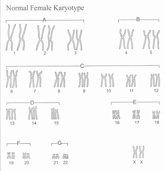 Biology Karyotype Worksheet Answers Key Inspirational 10 Best Of Karyotype Worksheet Answers Biology