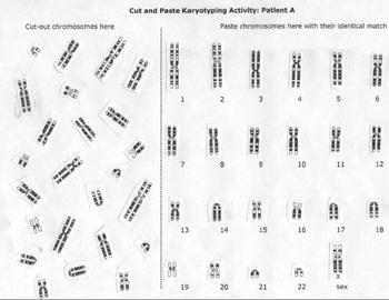 Biology Karyotype Worksheet Answers Key Inspirational Karyotype Chromosome Lab Activity by Beverly Biology