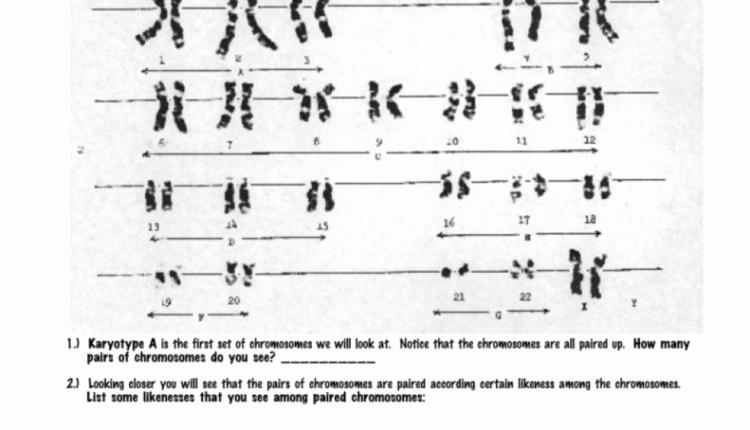 Biology Karyotype Worksheet Answers Key Inspirational Simple Karyotype Worksheetk Wp E Example From by
