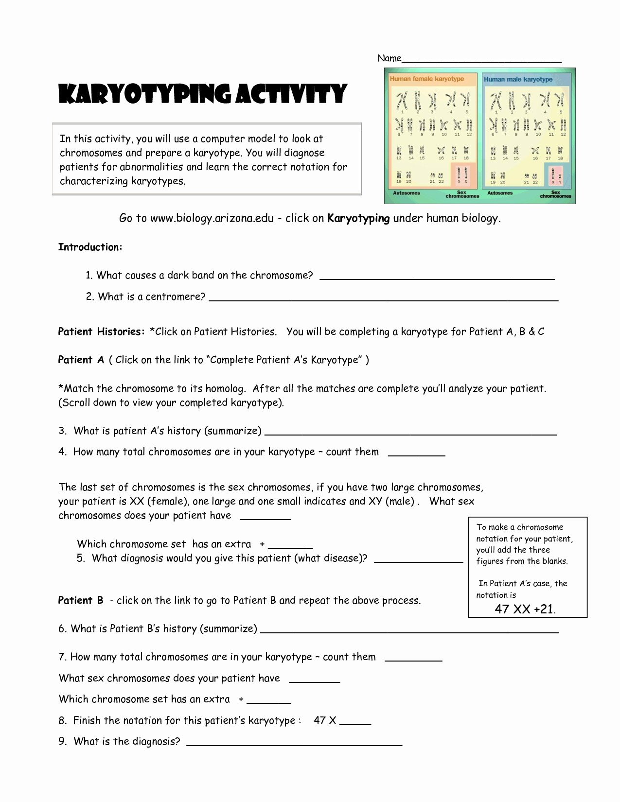 Biology Karyotype Worksheet Answers Key Lovely Karyotyping Activity Doc Teaching Stuff
