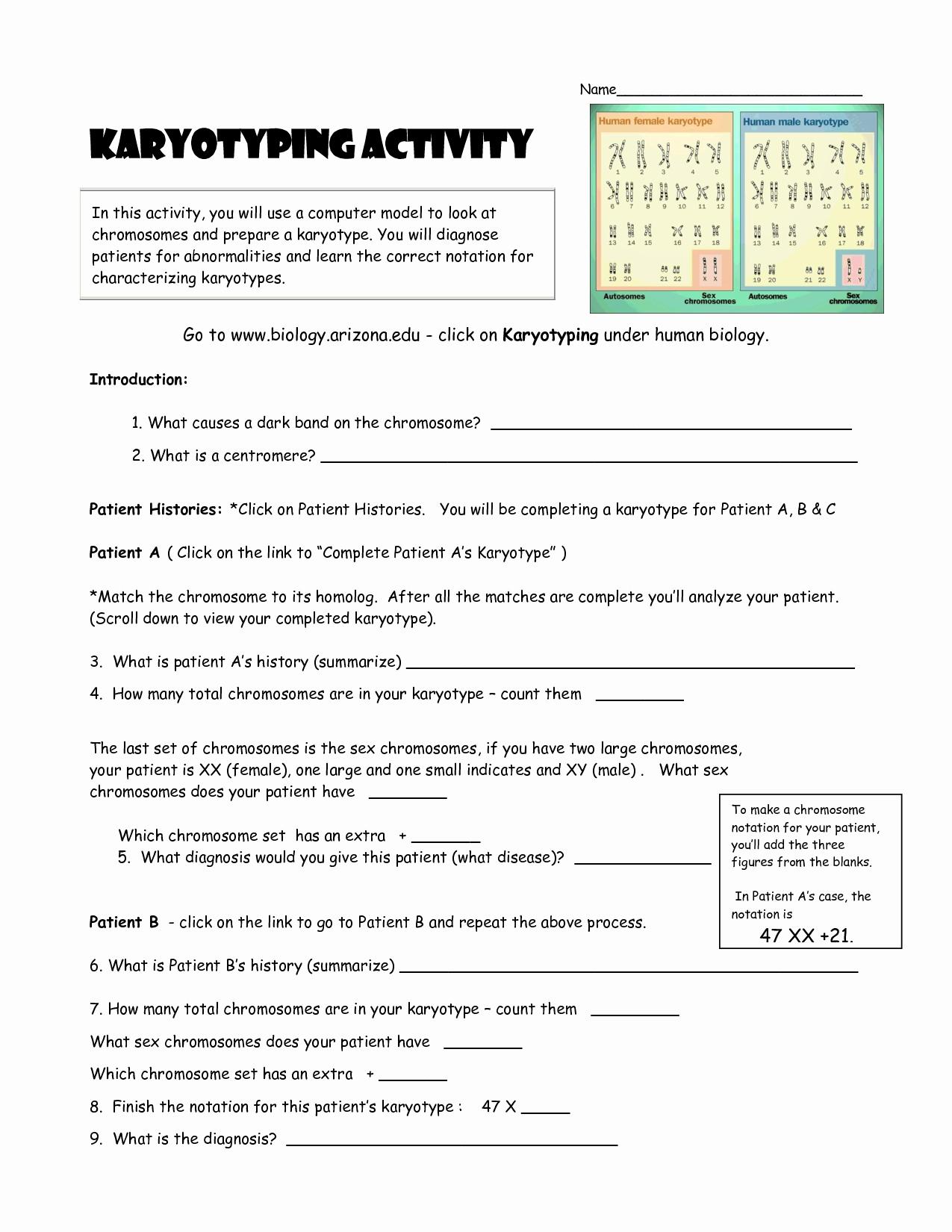 Biology Karyotype Worksheet Answers Key Lovely Karyotyping Activity Doc Teaching Stuff