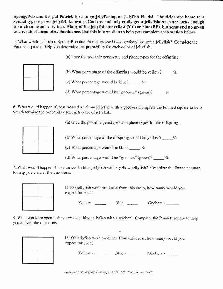 Blood Type and Inheritance Worksheet New Genetics Worksheet Answers