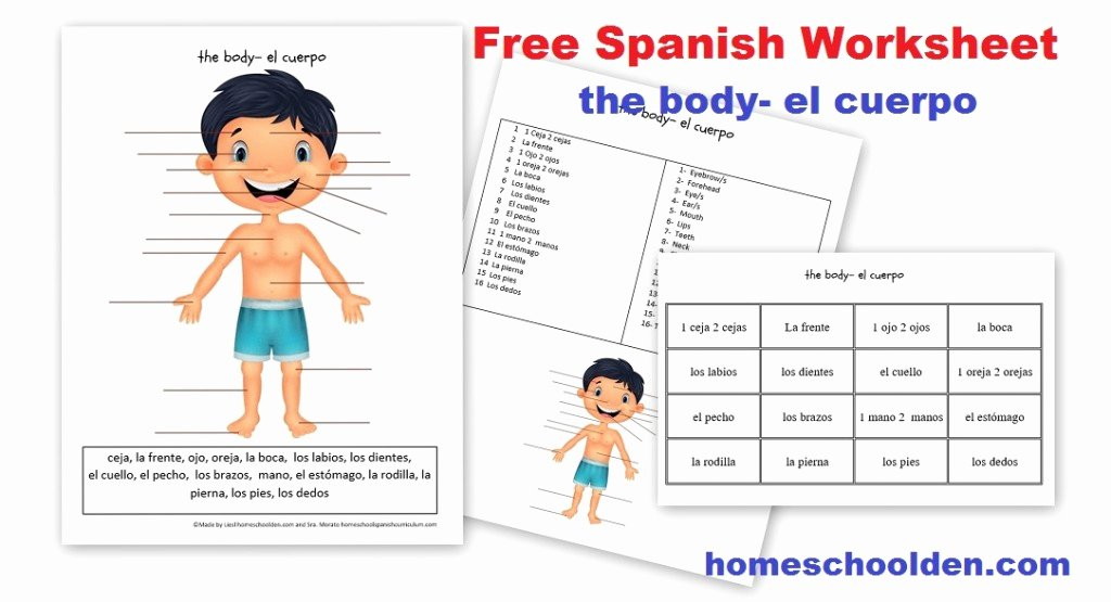 Body Parts In Spanish Worksheet Awesome Free Spanish Worksheet Parts Of the Body El Cuerpo