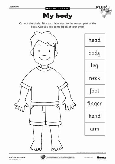 Body Parts In Spanish Worksheet Best Of Free Spanish Classroom