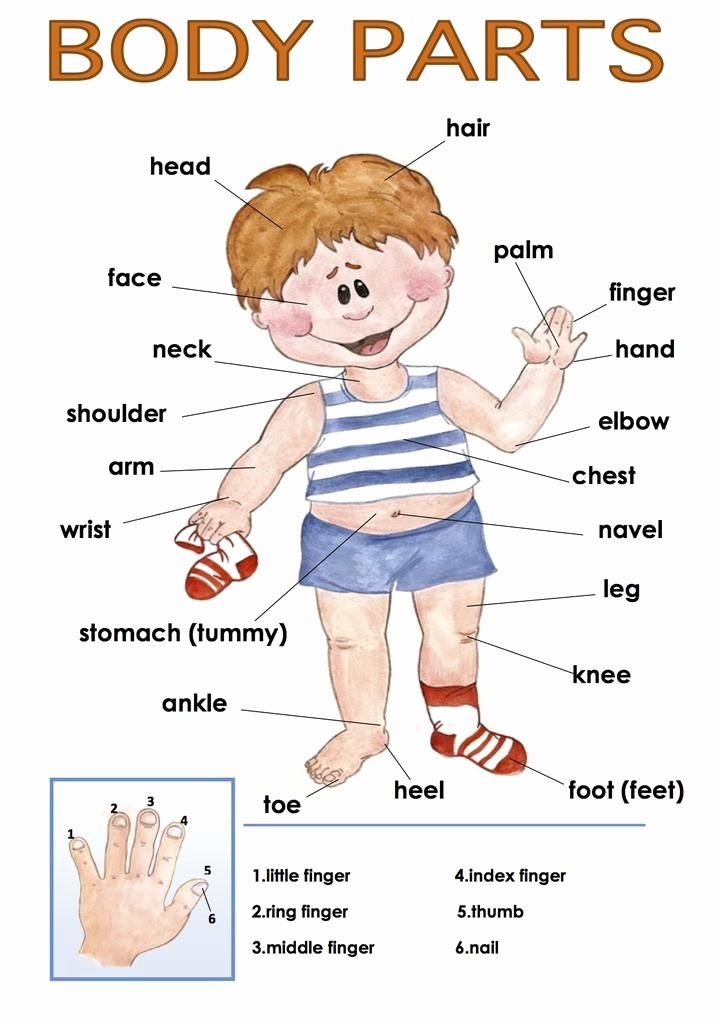 Body Parts In Spanish Worksheet Inspirational 17 Best Ideas About Body Parts On Pinterest