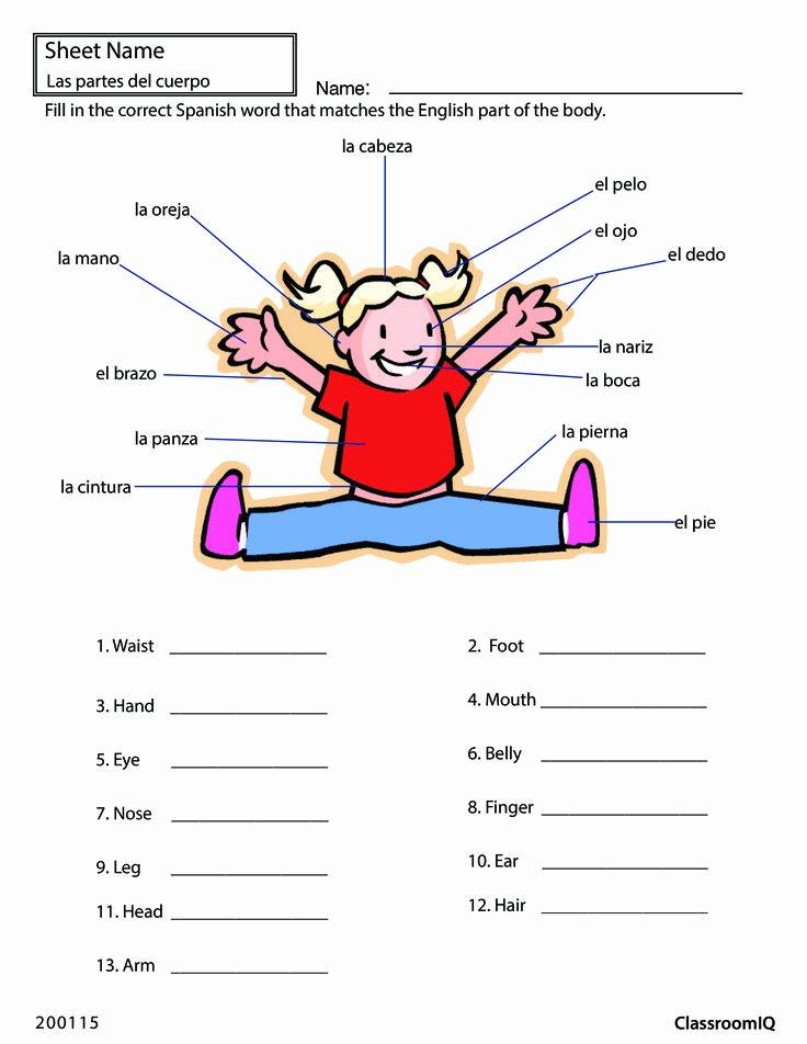 Body Parts In Spanish Worksheet Luxury Body Parts In Spanish Spanishworksheets Classroomiq