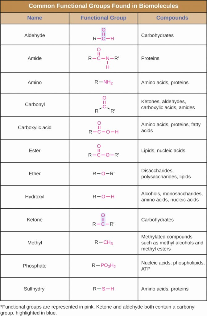 Building Macromolecules Worksheet Answers Awesome the Latest Template Of organic Molecules Biology