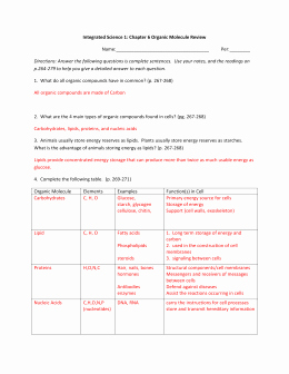 Building Macromolecules Worksheet Answers Elegant Biomolecule Review Worksheet