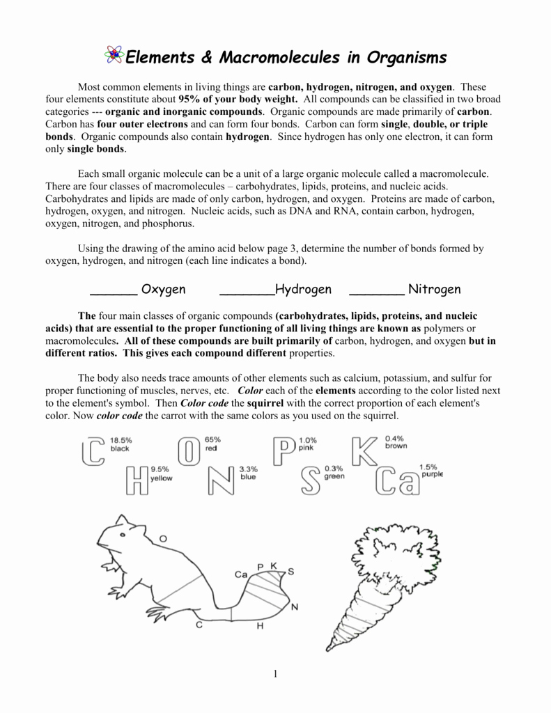 Building Macromolecules Worksheet Answers Elegant Elements and Macromolecules In organisms Worksheet Answers