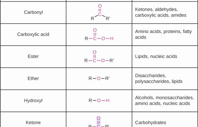 Building Macromolecules Worksheet Answers Elegant the Latest Template Of organic Molecules Biology