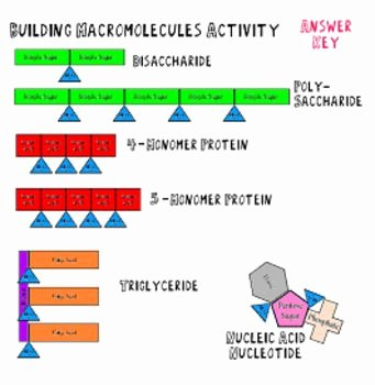Building Macromolecules Worksheet Answers Luxury Building Macromolecules Lab Activity Notes and Review