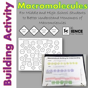 Building Macromolecules Worksheet Answers Unique 1000 Ideas About Nucleic Acid On Pinterest