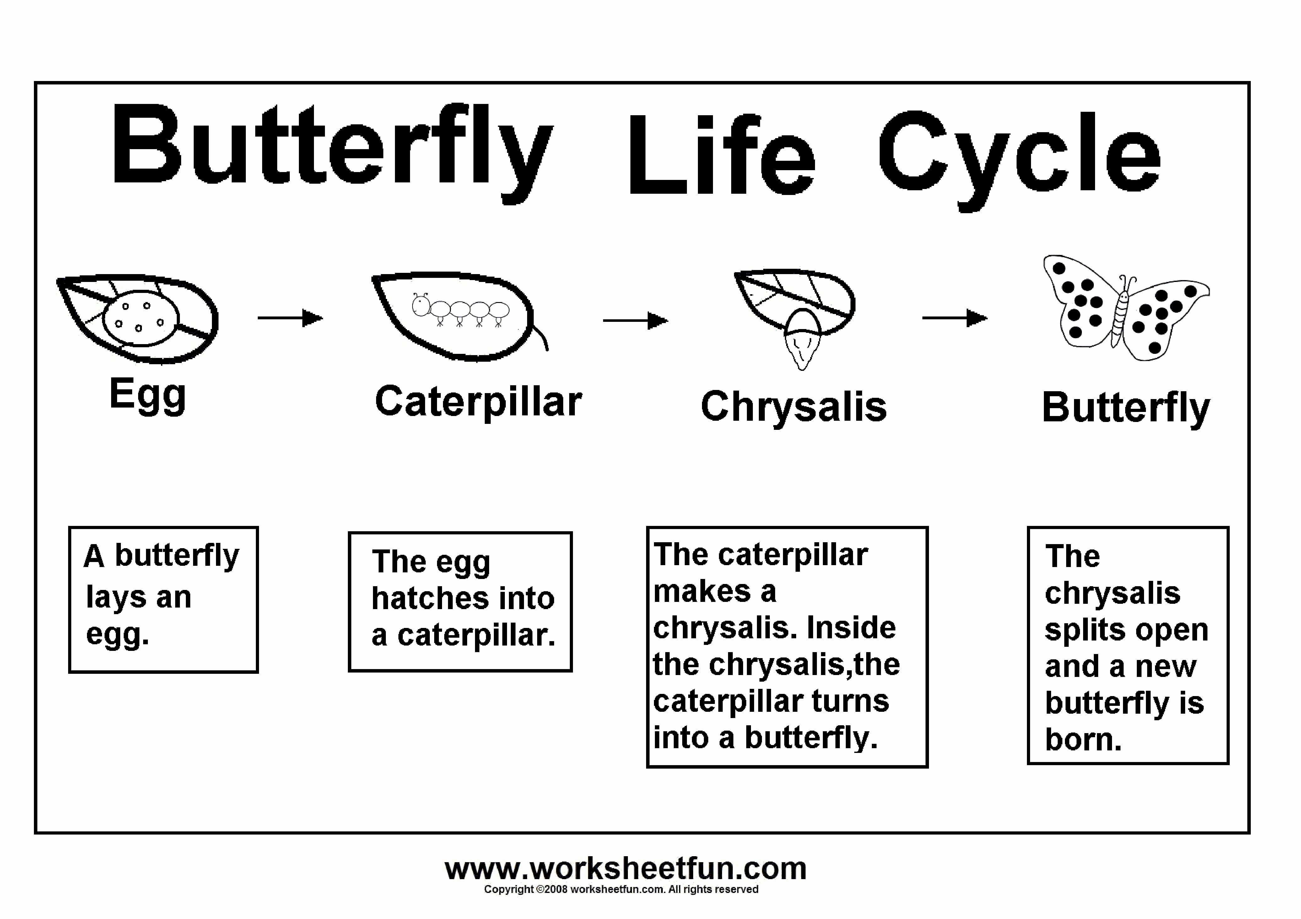 Butterfly Life Cycle Worksheet Awesome 8 Kindergarten Worksheet Examples Pdf