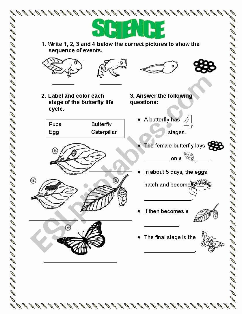 Butterfly Life Cycle Worksheet Awesome Life Cycle Frog butterfly Esl Worksheet by Lperecita