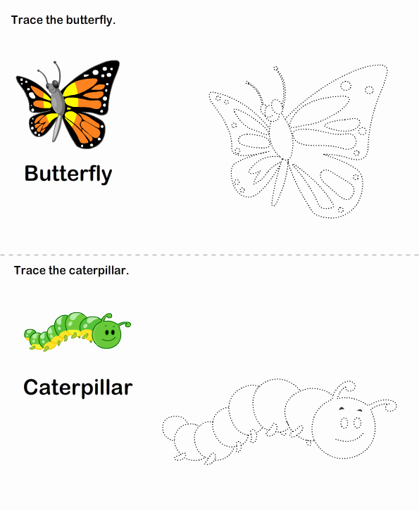 Butterfly Life Cycle Worksheet Beautiful butterfly Life Cycle Worksheet Worksheet Turtle Diary