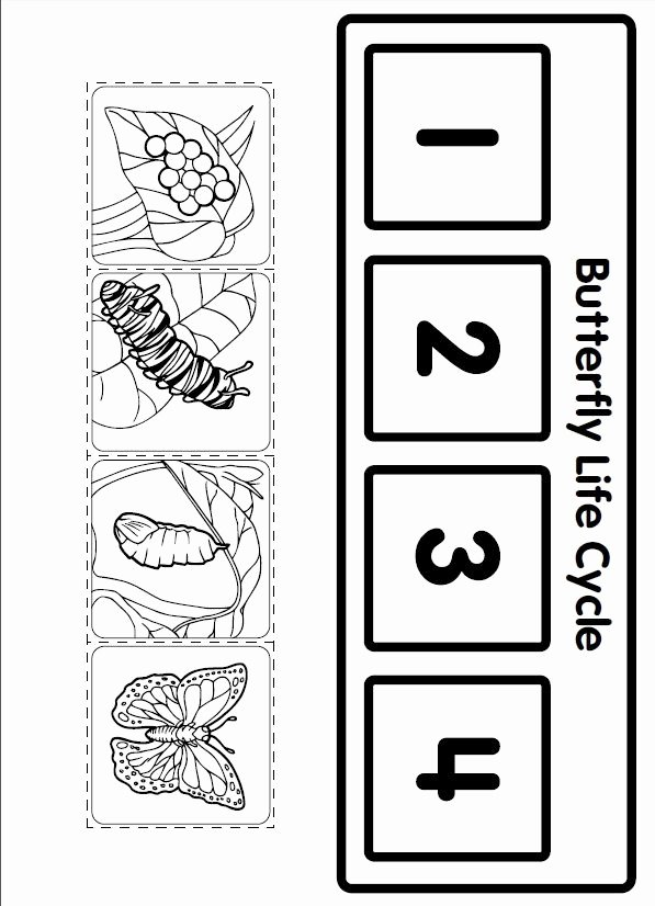Butterfly Life Cycle Worksheet Beautiful Crafts Actvities and Worksheets for Preschool toddler and