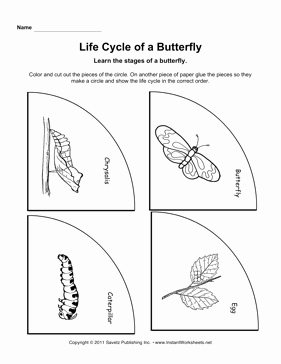Butterfly Life Cycle Worksheet Beautiful Life Cycle butterfly Worksheet