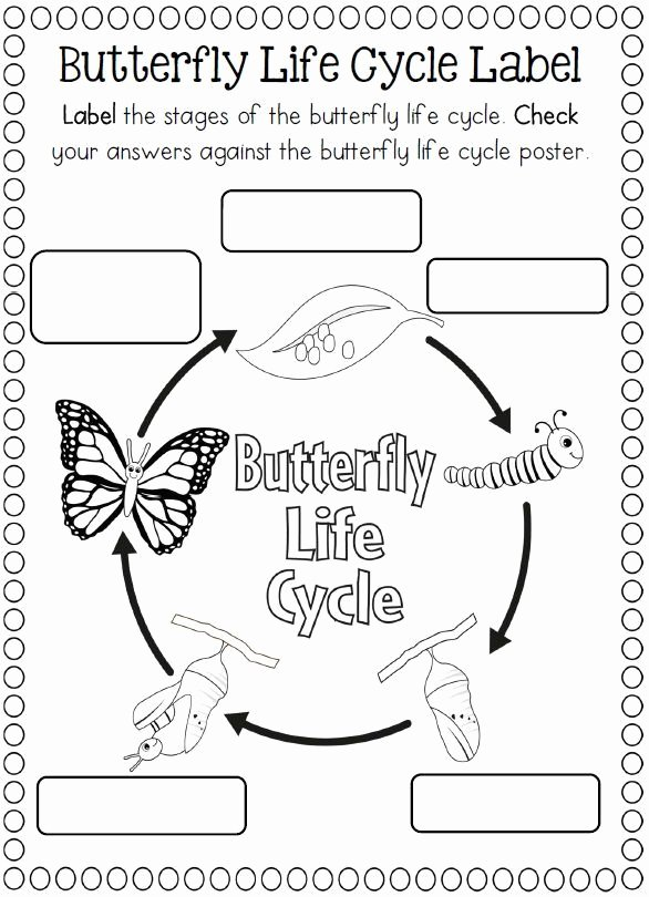 Butterfly Life Cycle Worksheet Best Of Life Cycle butterfly Worksheet for Kids 2