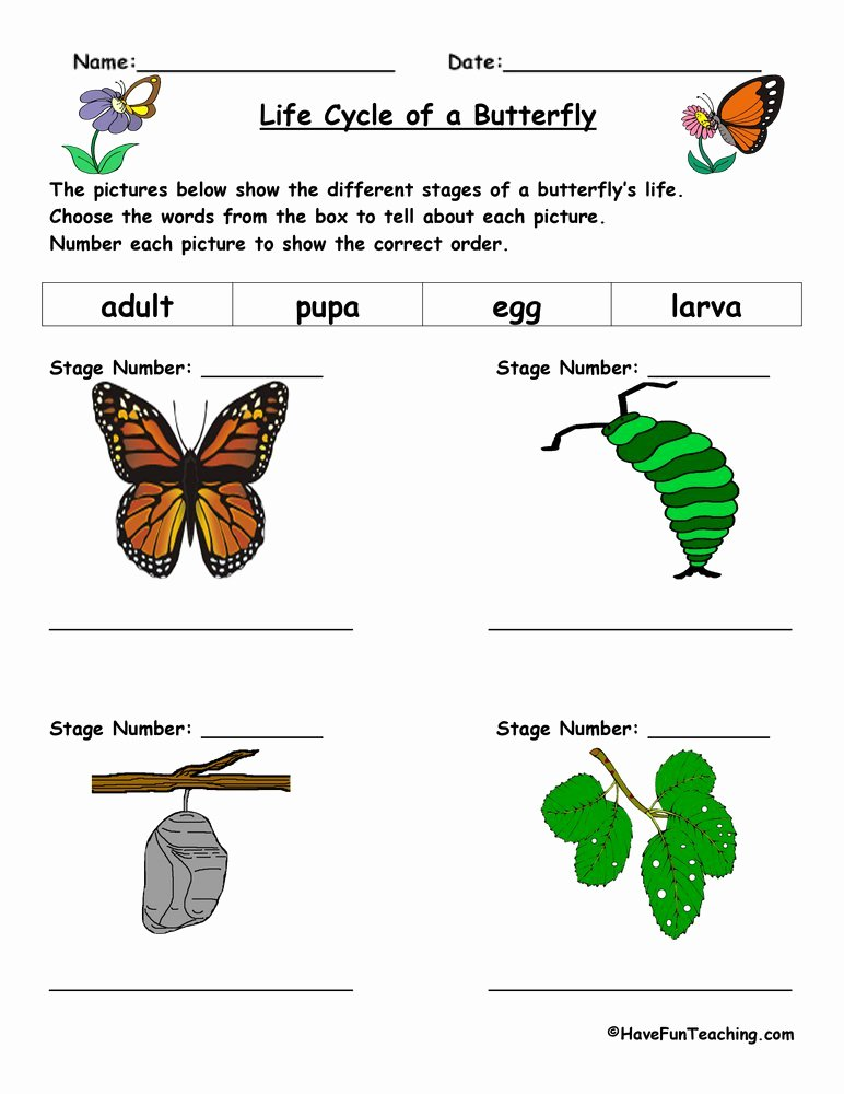 Butterfly Life Cycle Worksheet Best Of Science Worksheets Resources