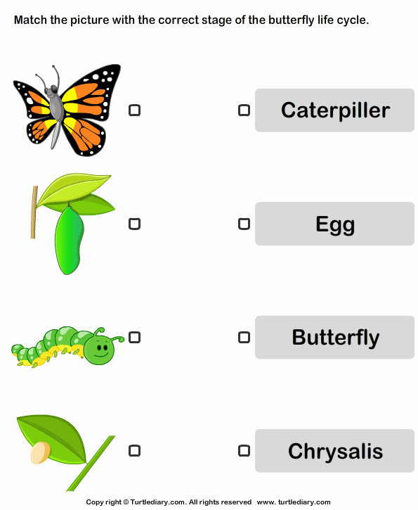 Butterfly Life Cycle Worksheet Elegant butterfly Life Cycle Worksheet Turtle Diary