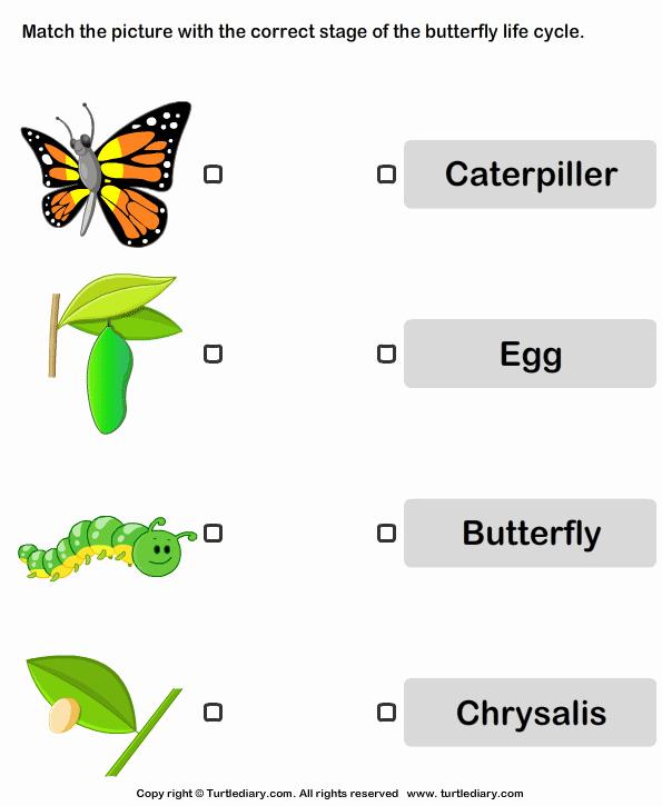 Butterfly Life Cycle Worksheet Elegant butterfly Life Cycle Worksheet Turtle Diary