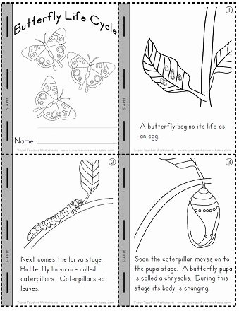 Butterfly Life Cycle Worksheet Elegant Check Out Our Worksheets to Help Students Learn About the