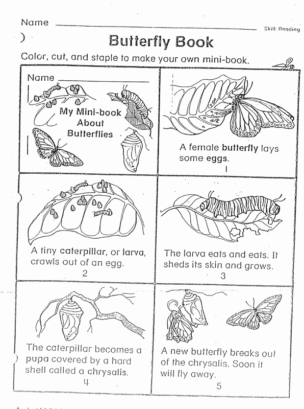 Butterfly Life Cycle Worksheet Elegant Day 1 Introduction to butterfly Life Cycles Elementary