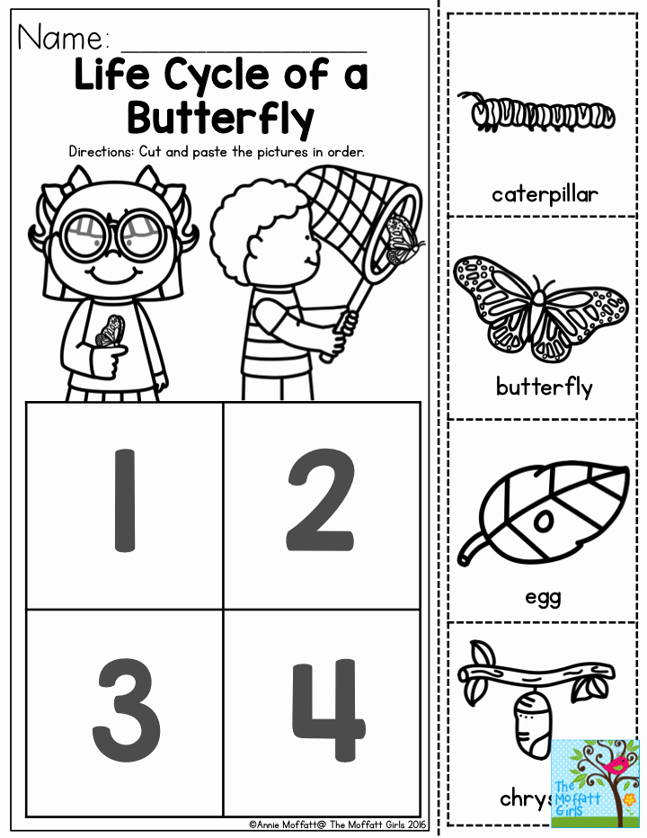 Butterfly Life Cycle Worksheet Elegant Life Cycle Of A butterfly You Can Teach the Basic