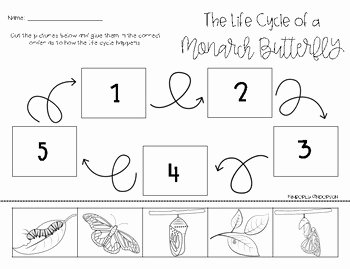 Butterfly Life Cycle Worksheet Elegant Monarch butterfly Life Cycle Cut Paste by Beached Bum