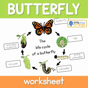 Butterfly Life Cycle Worksheet Fresh butterfly Life Cycle Worksheet by Little Blue orange