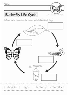 Butterfly Life Cycle Worksheet Fresh Free Life Cycle Of A butterfly Cut & Paste Worksheet