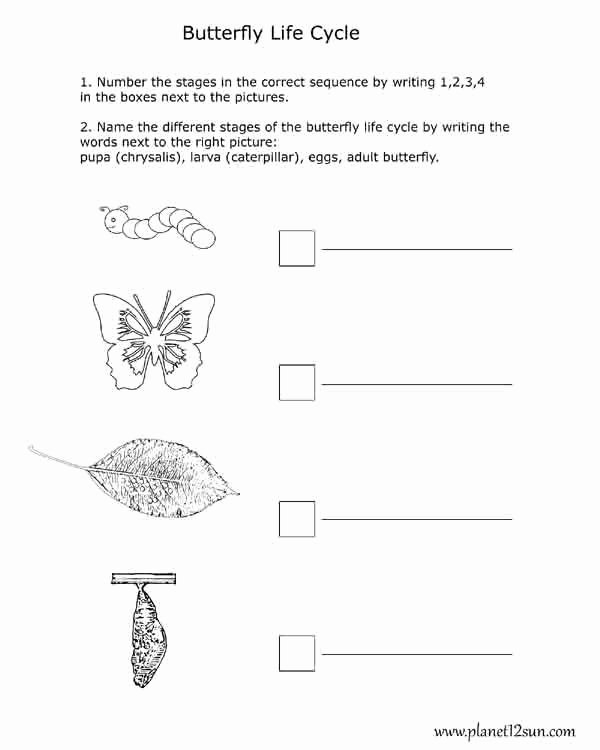 Butterfly Life Cycle Worksheet Fresh Free Printables for Kids