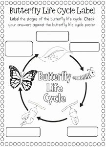 Butterfly Life Cycle Worksheet Fresh Life Cycle Of A butterfly Coloring Page