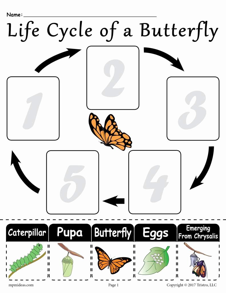 "Butterfly Life Cycle Worksheet Fresh ""life Cycle Of A butterfly"" Free Printable Worksheet"
