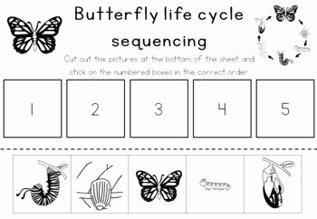 Butterfly Life Cycle Worksheet Inspirational butterfly Life Cycle Sequencing Activity Worksheet by