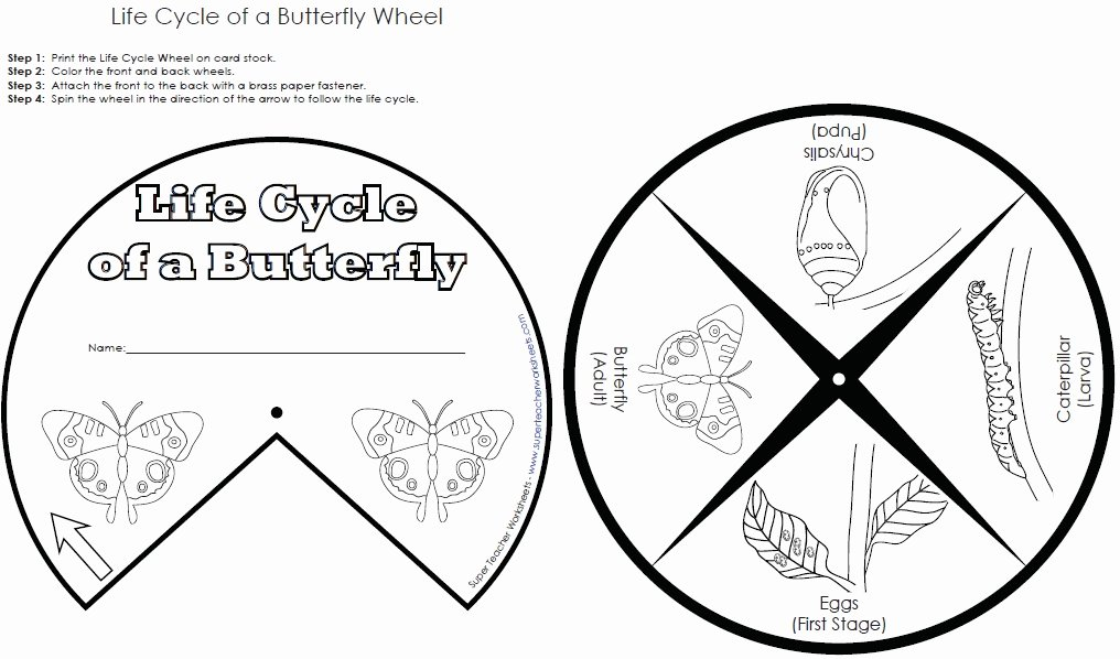 Butterfly Life Cycle Worksheet Inspirational butterfly Life Cycle Wheel