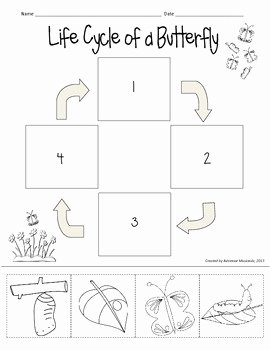 Butterfly Life Cycle Worksheet Inspirational Freebie butterfly Life Cycle Cut & Paste by Adrienne