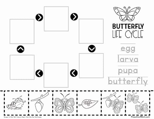 Butterfly Life Cycle Worksheet Inspirational Life Cycle Of A butterfly Worksheet Preschool Mom