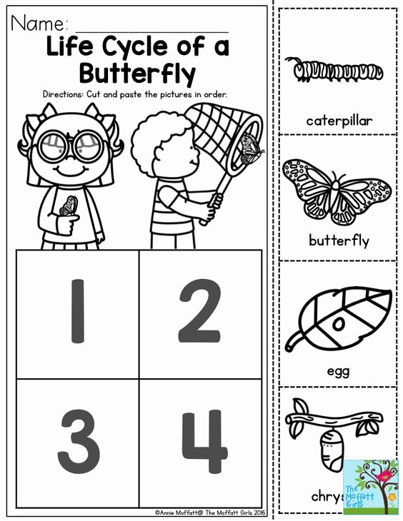 Butterfly Life Cycle Worksheet Inspirational Life Cycle Of A butterfly You Can Teach the Basic