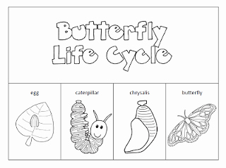 Butterfly Life Cycle Worksheet Inspirational Other Worksheet Category Page 350 Worksheeto