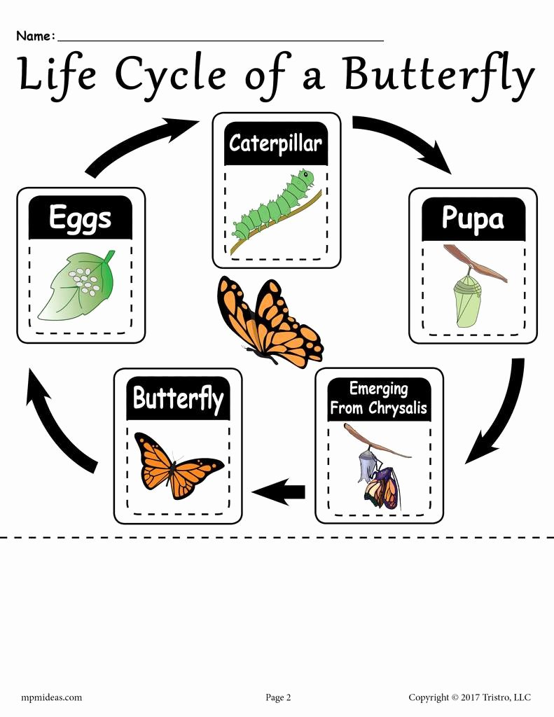 """Butterfly Life Cycle Worksheet Inspirational """"life Cycle Of A butterfly"""" Free Printable Worksheet"""