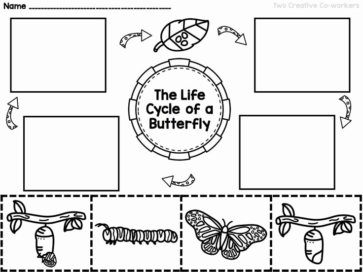 Butterfly Life Cycle Worksheet Inspirational the Life Cycle Of A butterfly Printable Mini Book
