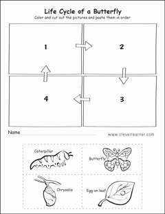 Butterfly Life Cycle Worksheet Lovely Life Cycle Worksheets for Preschools