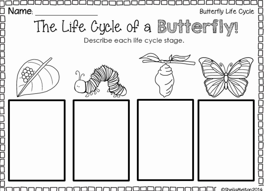 "Butterfly Life Cycle Worksheet Lovely Your Students Will Be ""crawling"" with Excitement when You"